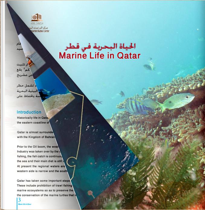 Marine Life in Qatar
